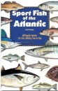 Sport Fish of the Atlantic, Florida, or Freshwater