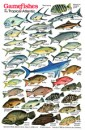 Gamefish Tropical Atlantic Fish ID Card